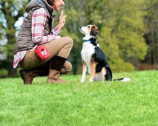 Prenez soin de votre animal avec un magasin animaux Maxi Zoo